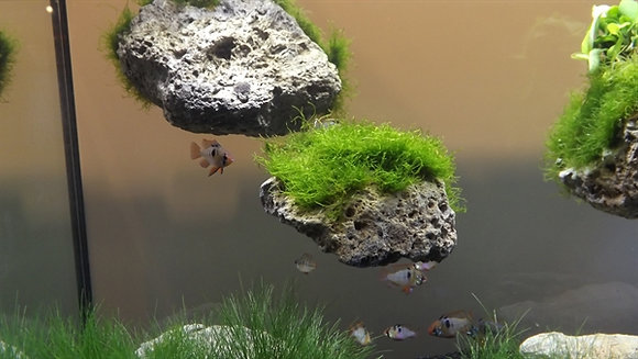 Floating Stone L