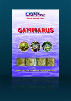 Gammarus 100 gr