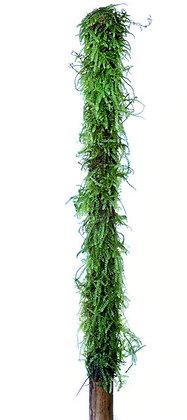 Bamboo Stick met javavaren