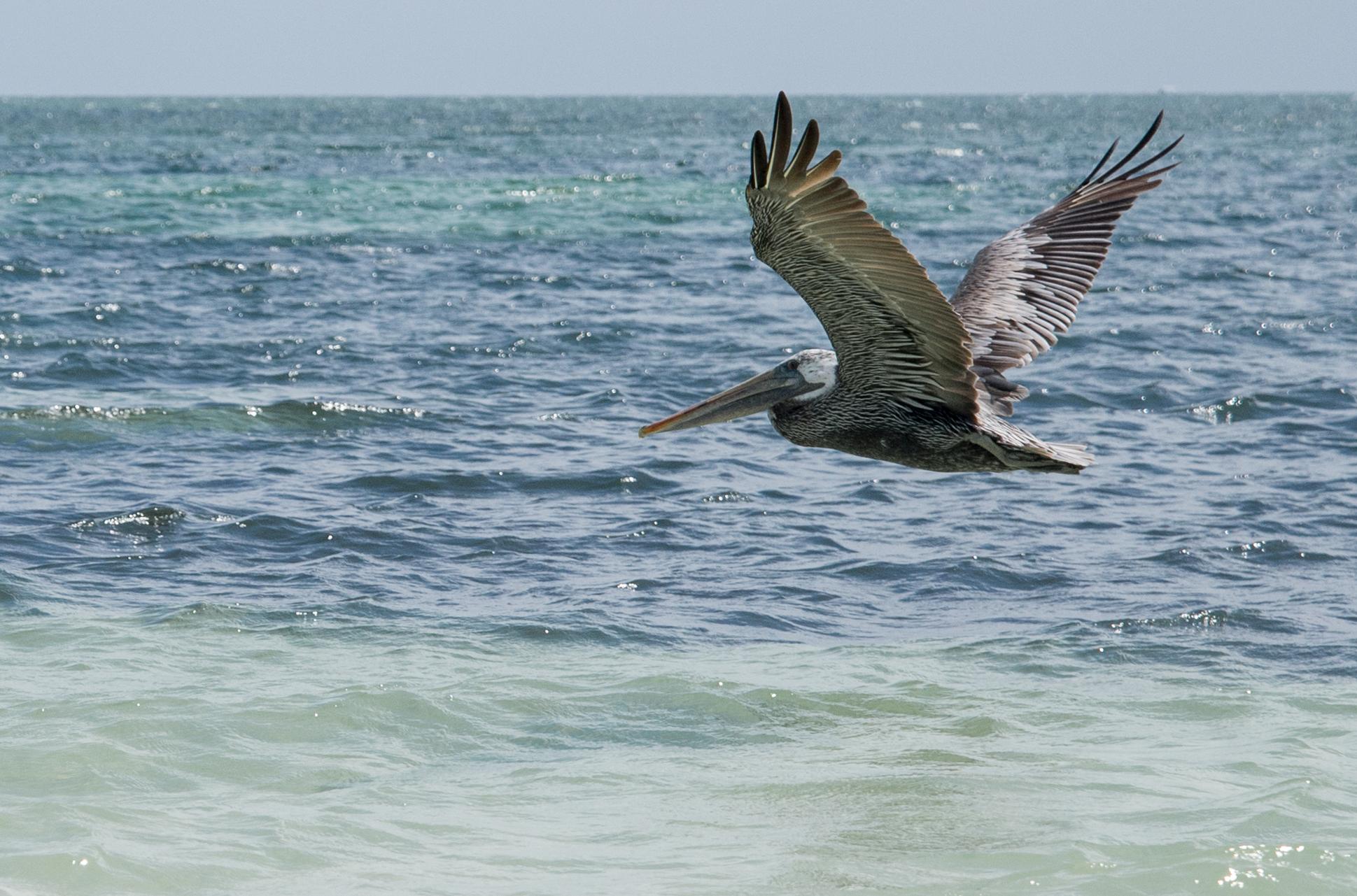 Key West-179