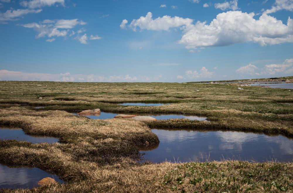 Mnt Evans Landscape