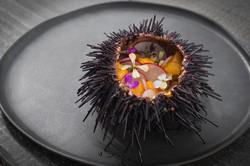 Urchin Pic