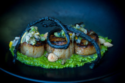 Scallop with Cardoon