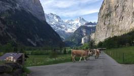 Walking in Switzerland.mp4