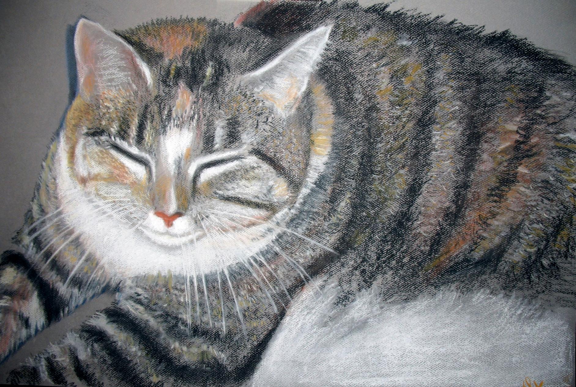 """Tabby Cat"""