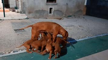 La mamma e i cuccioli