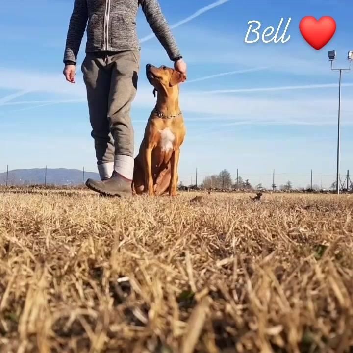 Bell, quasi 6 anni ❤