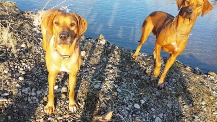 La mia serenità, la mia vita, la mia passione, il mio lavoro, il mio tutto.....i miei cani ❤