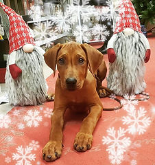 Xmas is coming ❤🎄❤ Il Natale quando arr