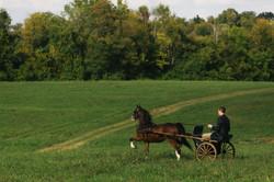 Hackney Pony on Hill