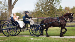 A Carriage Arrival!