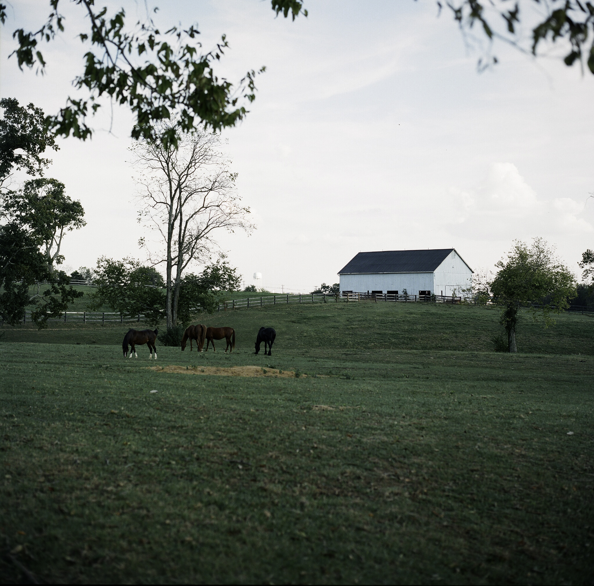 A Field at Walnut Way