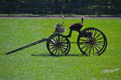 Antique Carriages Available