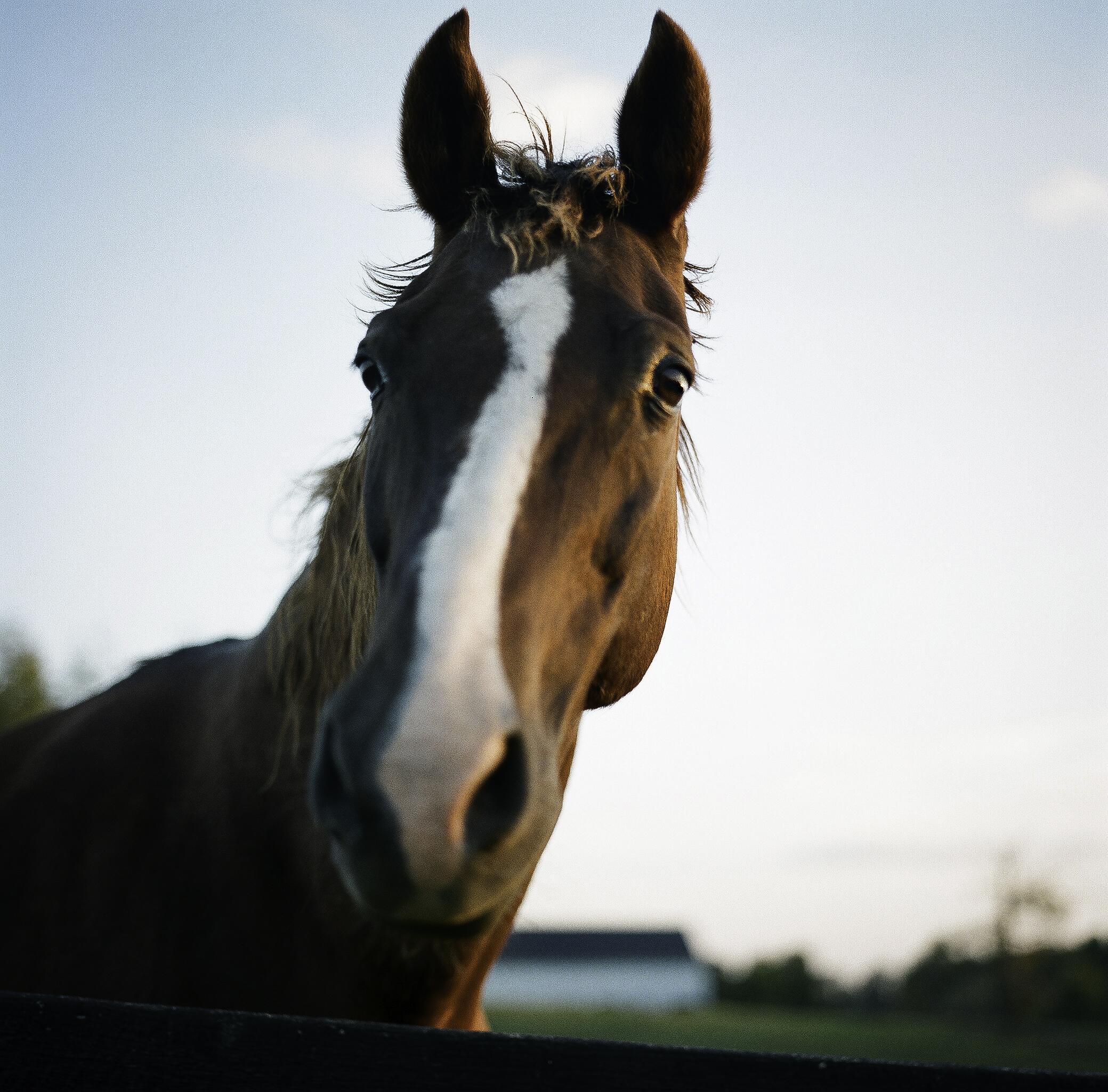 Horse at Walnut Way / Kentucky