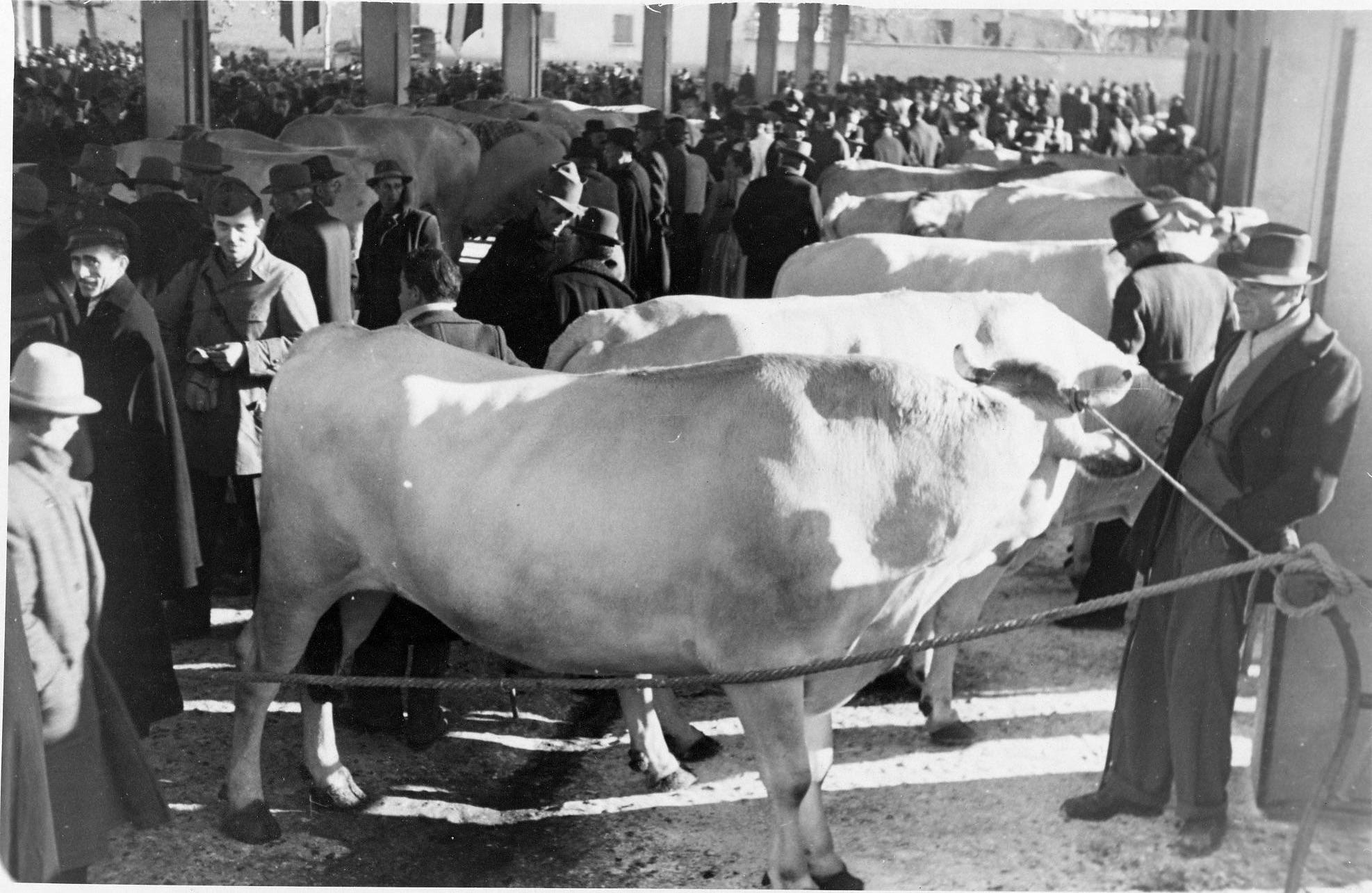 fiera del bue grasso 1934-55 028