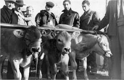 fiera del bue grasso 1934-55 027