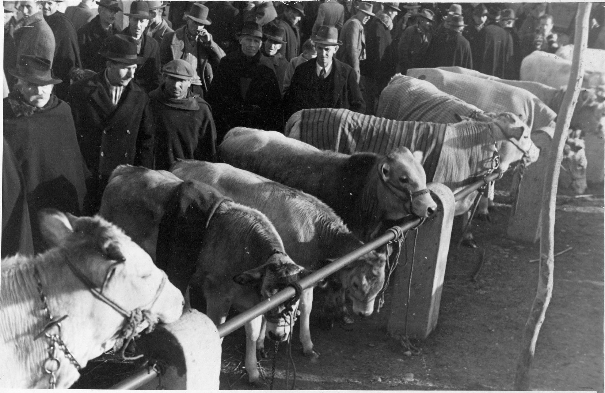fiera del bue grasso 1934-55 030