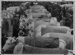 fiera del bue grasso 1934-55 013