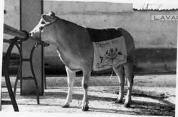 fiera del bue grasso 1934-55 049