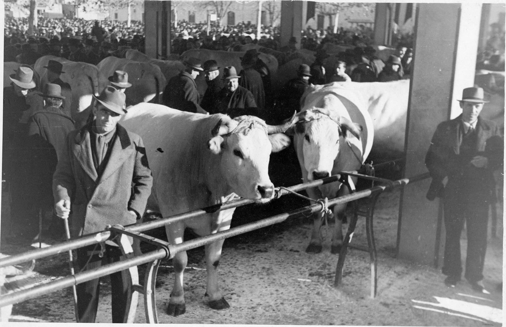fiera del bue grasso 1934-55 032