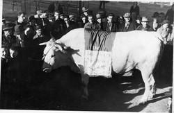 fiera del bue grasso 1934-55 022