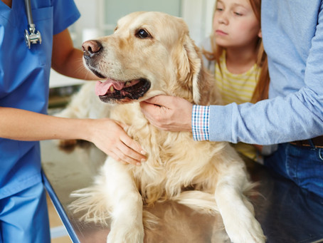 How and where to save money on your pet's Rx medication