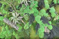 Mur végétal à Ottrott 67
