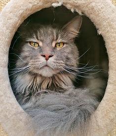 n féline 44 pension pour chats st lyphard l'Arche de lily 44410 garde chat