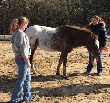 Homeschool, horse, youth, learning, at h