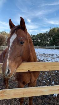 Zeke, horse, rescue, women group, youth,
