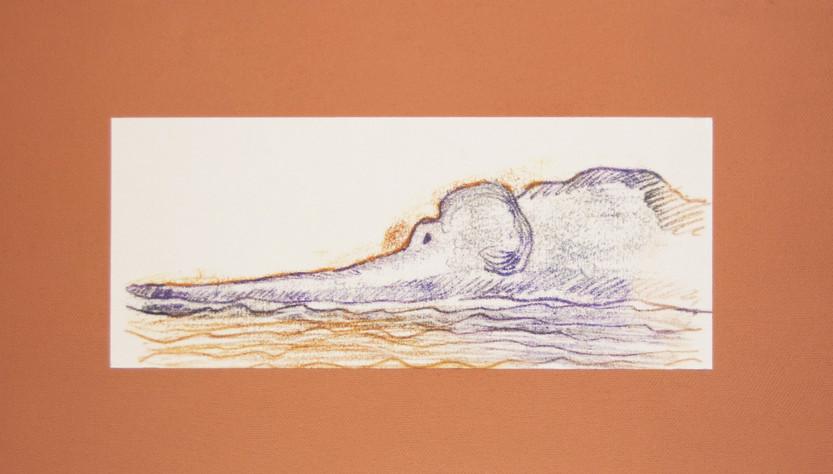 L'elefante riposa