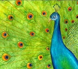 Pauley Peacock