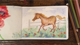 Sketchbook: Horse and poppy