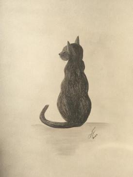 Cambie Cat Portrait