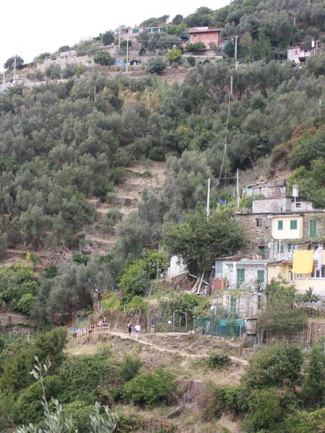 Hillside Hike, Cinque Terra, Italy