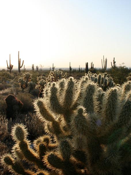 Sunrise, Phoenix, Arizona