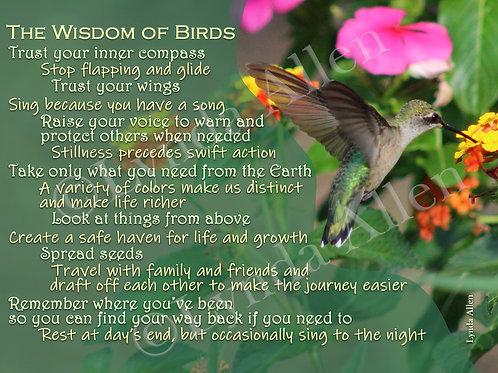 Set of 3 - The Wisdom of Birds 5x7