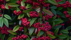 December Garden Tips