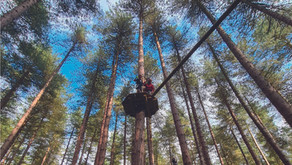 Five Go Ape At Sherwood Pines