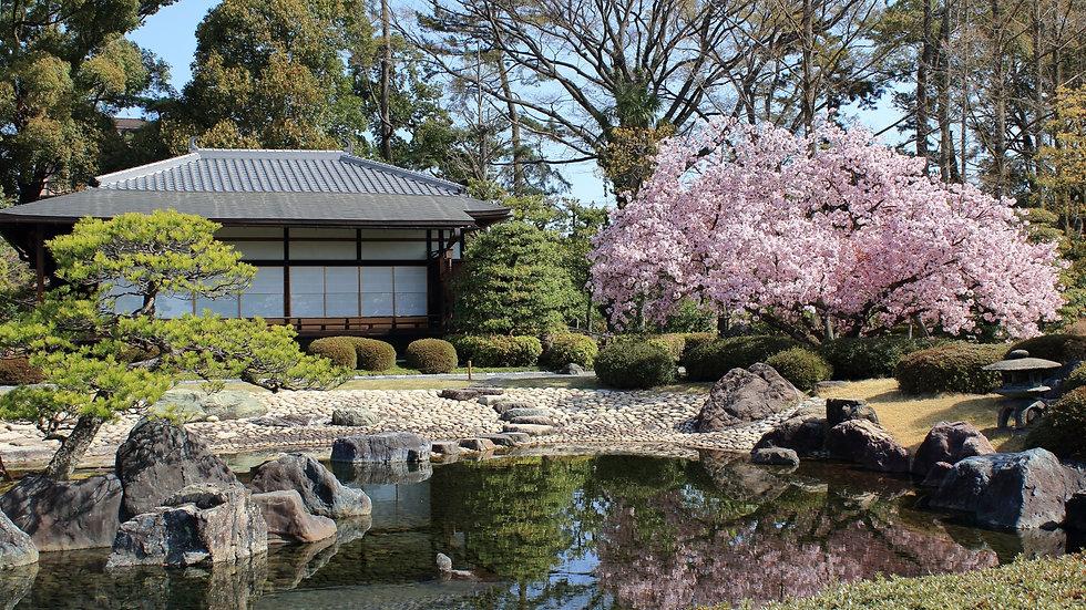 【Morning】Half Day Bus Tour : Historical Kyoto    【EN/CN/KO Audio Guide】