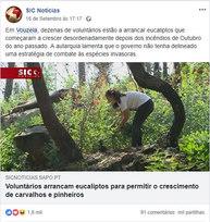 Voluntários arrancam eucaliptos para permitir o crescimento de carvalhos e pinheiros