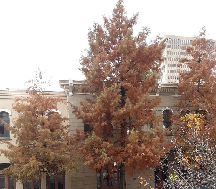 fall leaves 4