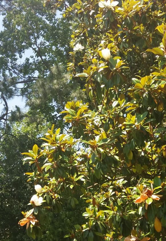 Magnolia3.5.10.18