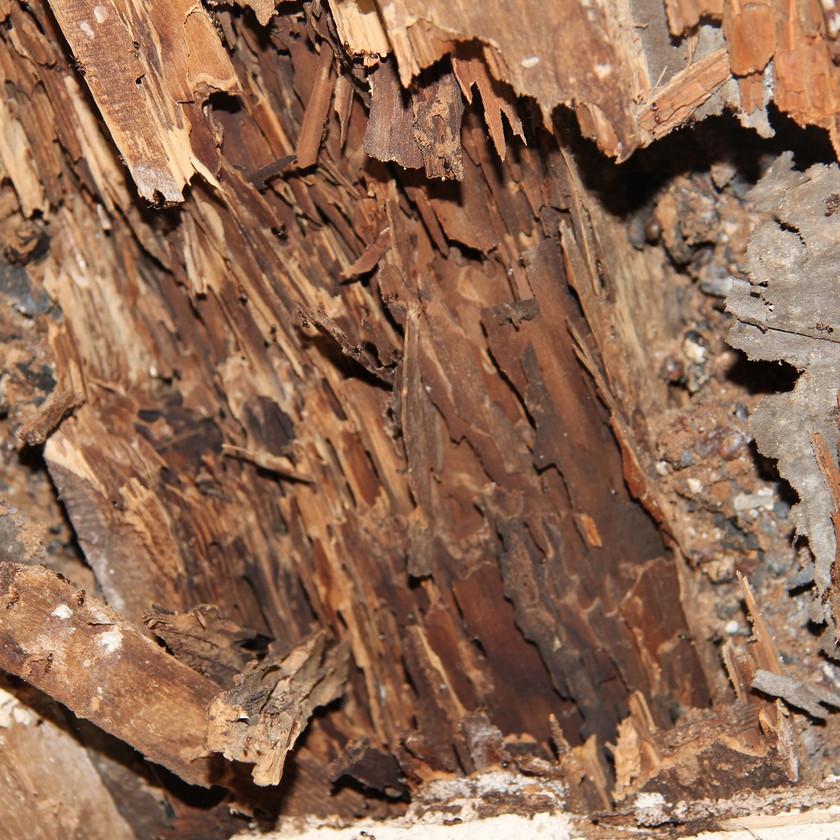Geschädigtes Holzfachwerk durch Holzpilze