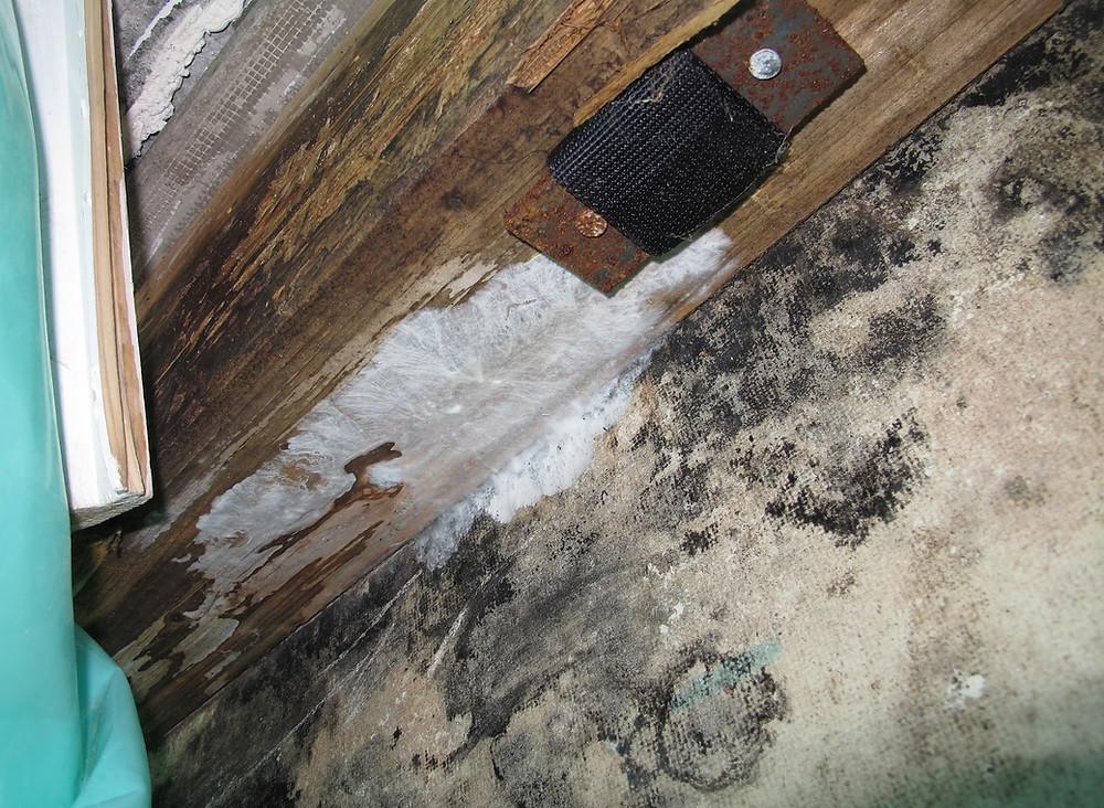 An der Terrassenbrüstung waren Fruchtkörper von holzzerstörenden Pilzbildungen aufgetreten.