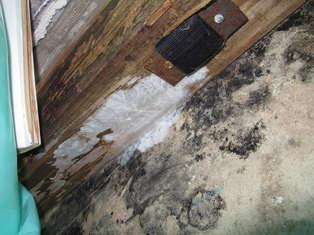 Balken mit Befall durch Holzpilze