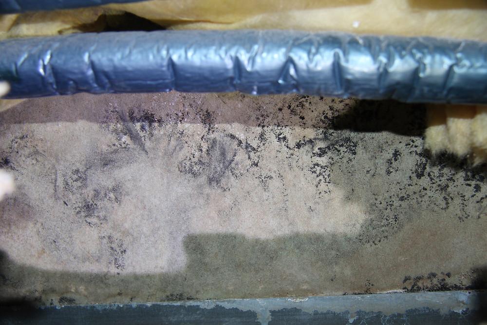 Rückseite der Gipskartonplatten an der Seite zum Badezimmer; hier waren Schimmelpilzbildungen vorhanden.
