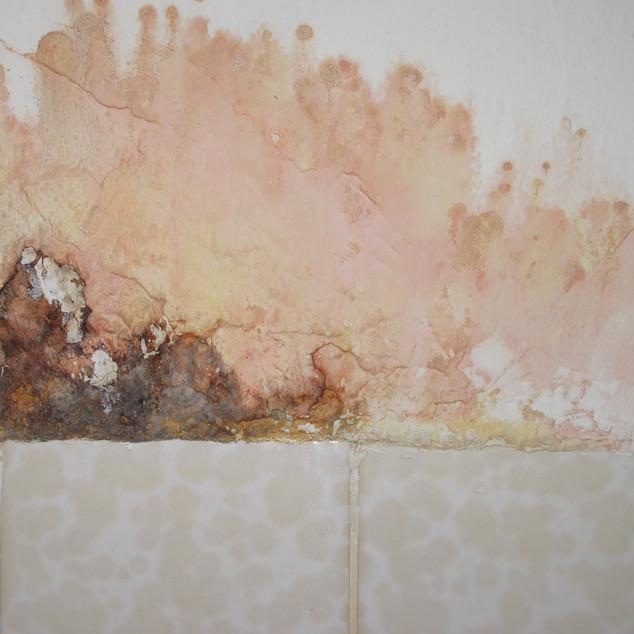 Schimmelpilze im Badezimmer