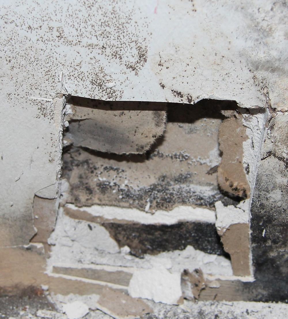 Abstellraum, Trennwand zum Badezimmer; Öffnungsstelle 1 im Sockelbereich: zwischen der ersten und der zweiten Lage der Gipskartonbekleidung waren Schimmelpilzbildungen vorhanden.
