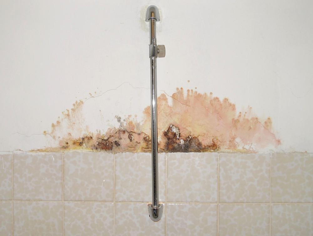 Schimmelpilzbildungen an einer Badezimmerwand im Bereich einer Duschstange oberhalb des Fliesenbelags.